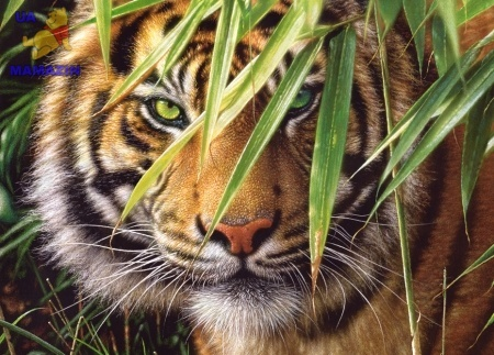 Castorland: Пазлы 260 эл. Тигр в джунглях