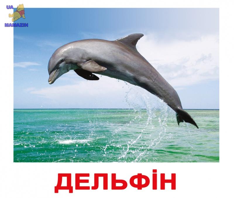 """Карточки большие украинские с фактами """"Мешканці водойм"""""""