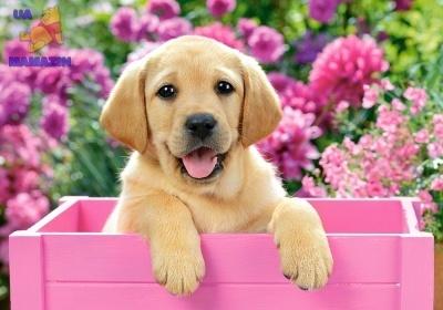 """Пазл """"Собака в ящике"""""""