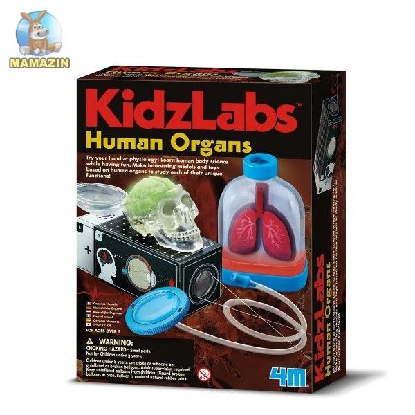 Детская лаборатория. Человеческие органы