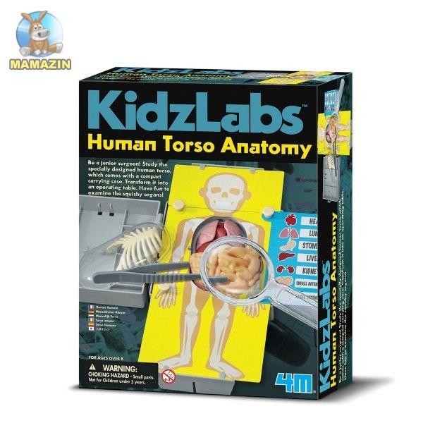 Детская лаборатория. Анатомия человеческого торса