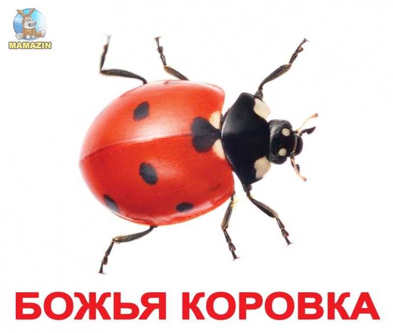 """Карточки большие русские с фактами """"Насекомые"""""""