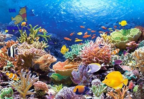 Castorland: пазл 1000 Коралловый риф
