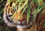 "Castorland: пазл ""Взгляд тигра"" 1500 эл."