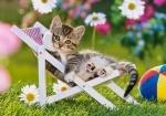 Castorland: Пазлы 500 элементов Котёнок на стуле