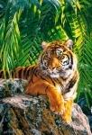 Castorland: Пазлы 500 элементов Тигрица