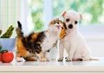 Castorland: Пазлы 500 элементов Щенок и котенок