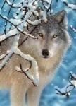 Castorland: Пазлы 260 элементов Волк в зимнем лесу