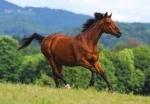 """Castorland: пазл """"Бегущая лошадь"""" 1000 эл."""