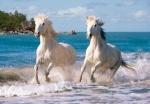 """Пазл 1000 """"Камаргские белые лошади"""""""