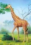 "Castorland: пазл ""Жираф"", 60 эл."
