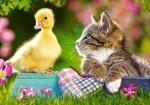 """Castorland: пазл """"Утёнок и кот"""", 60 эл."""