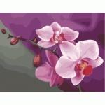 Раскраска по номерам - Розовые орихидеи