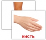 "Карточки мини украинские с фактами ""Людина"""