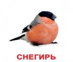 """Карточки большие русские с фактами """"Птицы"""""""