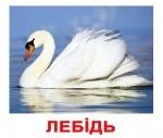 """Карточки большие украинские с фактами """"Птахи"""""""