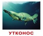 """Карточки большие русские с фактами """"Экзотические животн"""""""