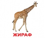"""Карточки большие русские с фактами """"Дикие животные"""""""