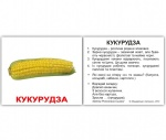"Карточки мини украинские с фактами ""Овочі"""
