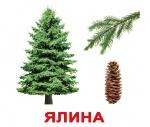 """Карточки большие украинские с фактами """"Дерева"""""""