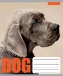 Тетрадь А5/12 клетка DOG