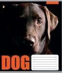 Тетрадь А5/12 лиия  DOG