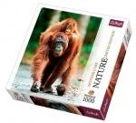 Пазлы Trefl, Nature, Орангутан, Индонезия, 1000 деталей