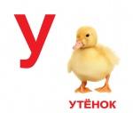 """Карточки ламинированные русские с фактами """"Алфавит"""""""