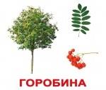 """Карточки большие украинские с фактами, ламинированые """"Дерева"""""""