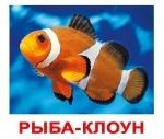"""Карточки большие русские с фактами """"Обитатели воды"""""""