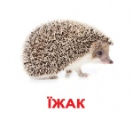 """Карточки большие украинские с фактами """"Дикі тварини"""""""