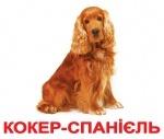 """Карточки большие украинские с фактами """"Породы собак"""", ламинированные"""