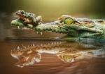 """Пазлы 500 """"Крокодил"""""""
