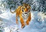 """Касторленд пазлы 500 """"Тигр в снегу"""""""