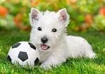 """Пазлы """"Белый щенок с мячом"""""""