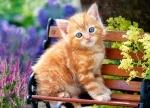 "Пазлы 180 ""Рыжий котенок"""