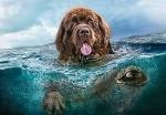 """Пазлы 1000 """"Пес в воде"""""""
