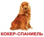 """Карточки большие украинские с фактами, ламинированые """"Породы собак"""""""