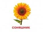 Картки міні (18 карток): Квіти (у)