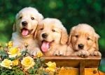 """Пазлы """"Три щенка"""""""