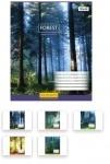 Тетрадь в клеточку А5/96 Magic Forest