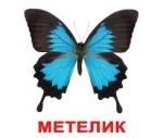 """Карточки большие украинские с фактами """"Комахи"""""""