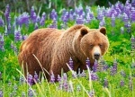 "Пазл 120 midi элементов ""Медведь на лугу"""
