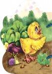 Книга Мої любі звірятка: Курчатко (у)