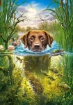 "Пазлы Касторленд 500 ""Плавающая собака"""