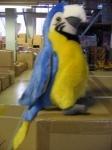 Мягкая игрушка Попугай голубой 20см