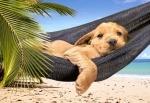 Castorland: Пазл собака в гамаке 500 элементов