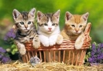 "Castorland: Пазл ""Три котёнка в корзине"" 500 эл."