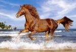 """Castorland: Пазл """"Лошадь в галлопе"""" 500 эл."""