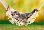 Castorland: Пазл котенок в гамаке 500 эл.